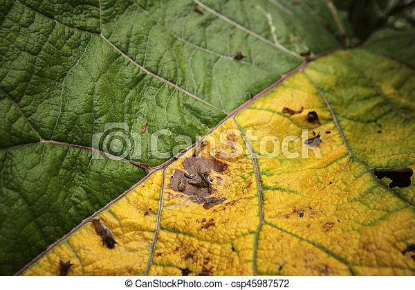 Autumn leaves - csp45987572