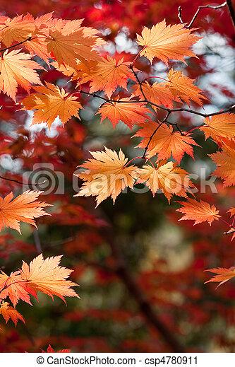 Autumn Leaves - csp4780911