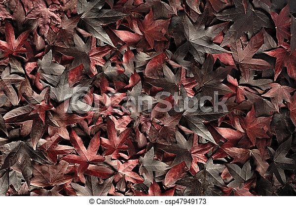 autumn leaves - csp47949173