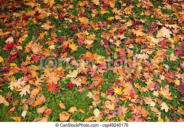 Autumn leaves - csp49240176