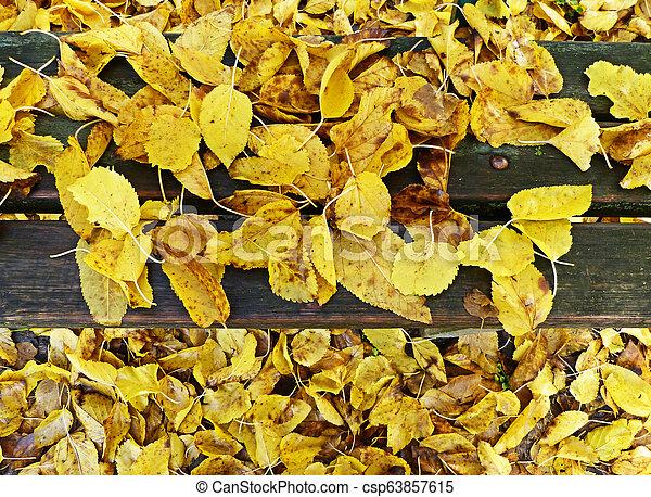 Autumn leaves - csp63857615