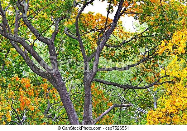 autumn leaves - csp7526551