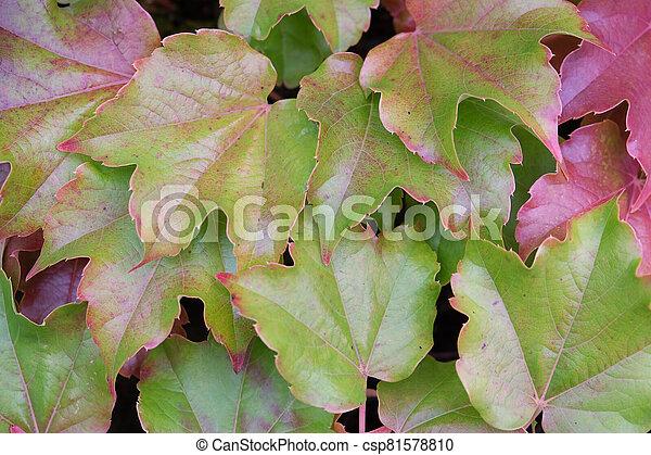 Autumn leaves - csp81578810