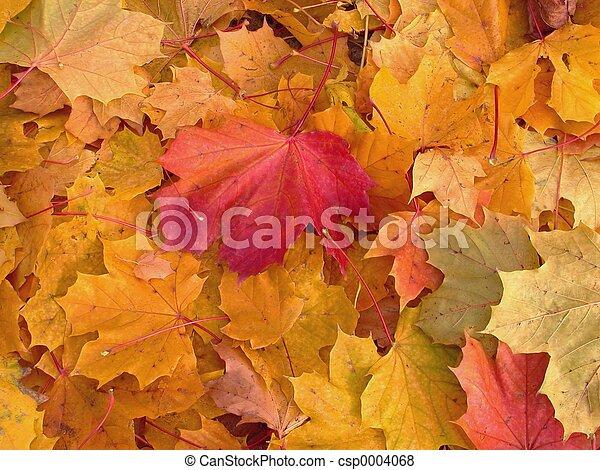 Autumn Leaves - csp0004068