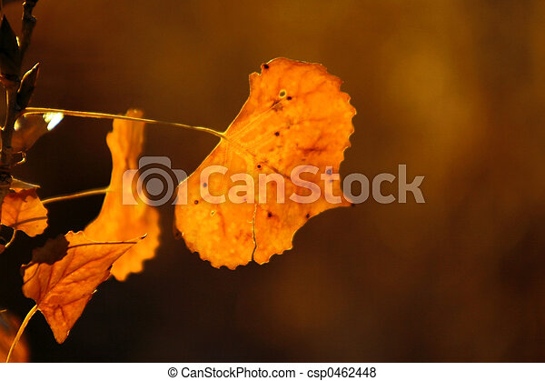 Autumn Leaves - csp0462448