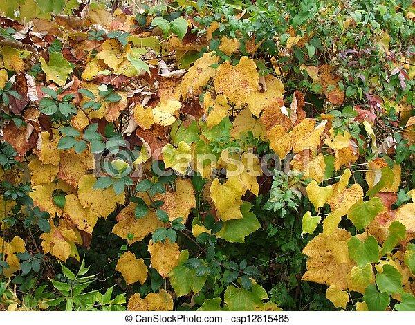 Autumn leaves - csp12815485