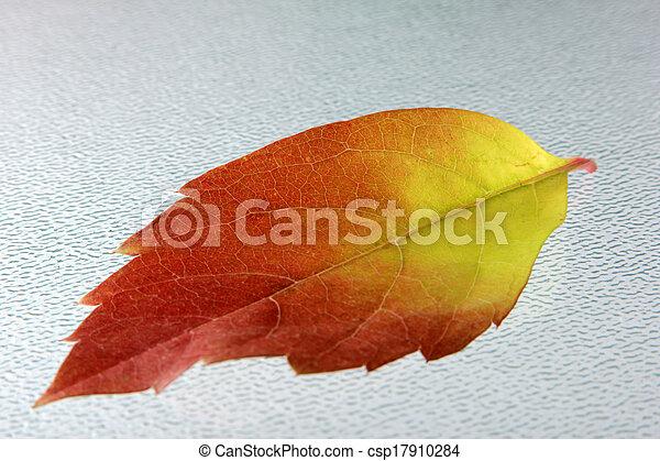 autumn leaves - csp17910284