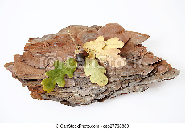 autumn leaves - csp27736880