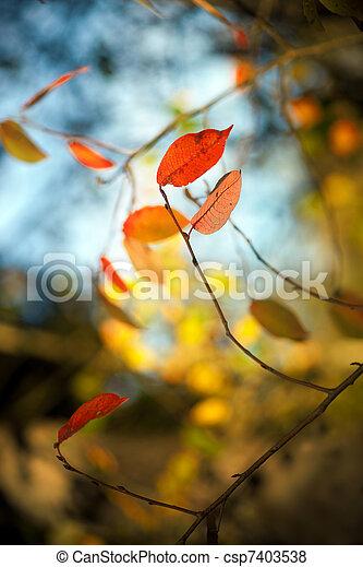 Autumn leaves - csp7403538