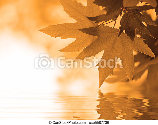 autumn leaves reflecting in the water, shallow focus - csp5587736