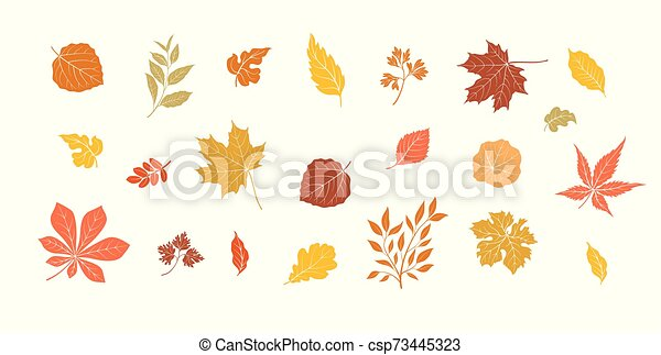 Autumn Leaves Set Fall Leaf Nature Icons Over White Background Nature Symbol Collection