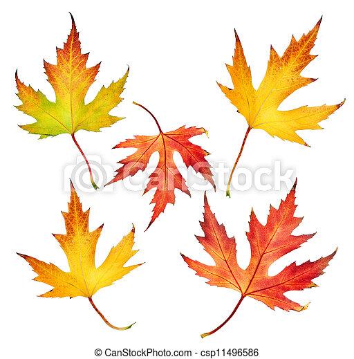 Autumn Leaves Set  - csp11496586