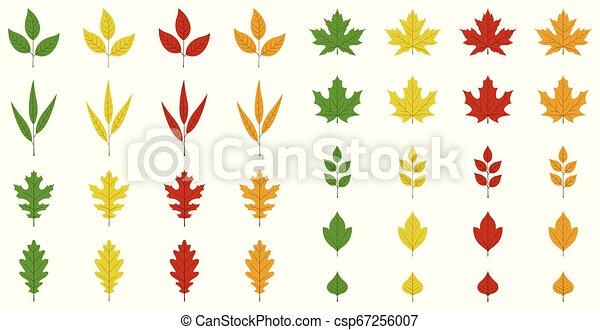 Autumn leaves set - csp67256007