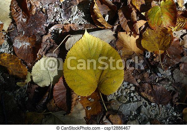 Autumn leaves - csp12886467