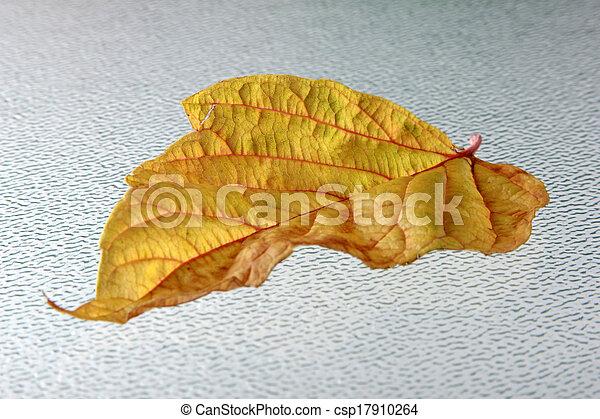 autumn leaves - csp17910264