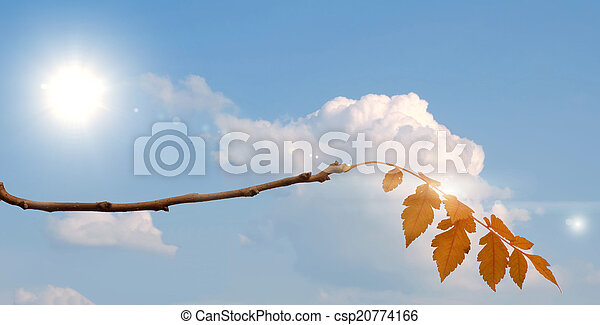 autumn leaves - csp20774166