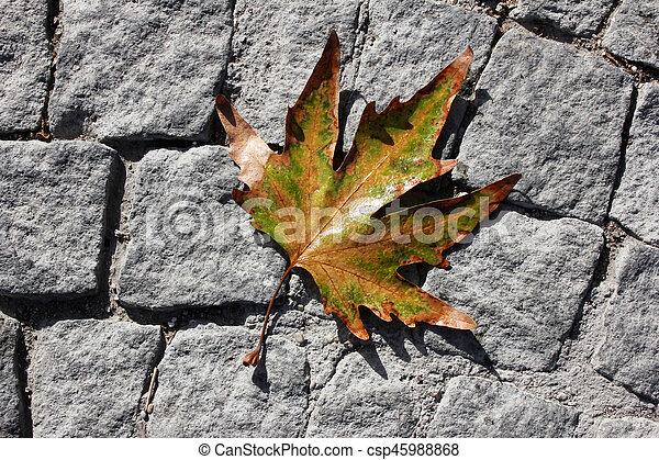 Autumn leaves - csp45988868