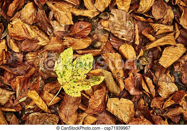 Autumn leaves - csp71939967