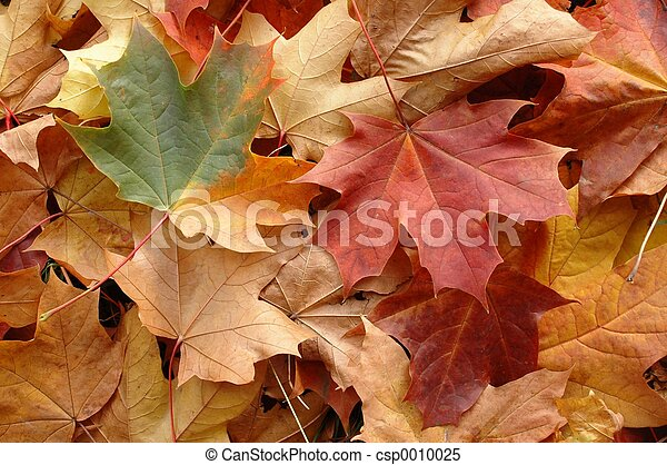 Autumn Leaves - csp0010025