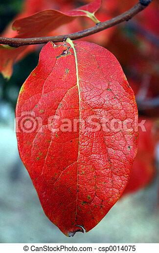 Autumn leaves - csp0014075