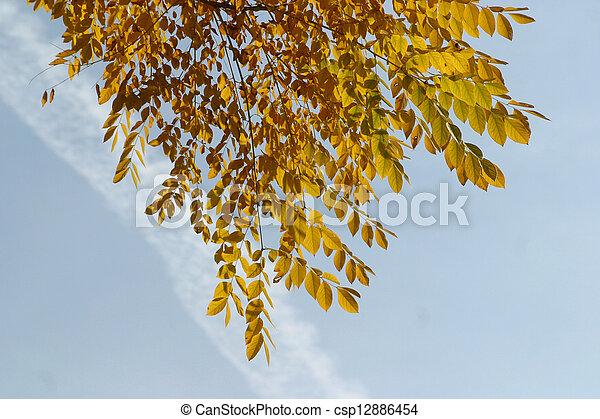 Autumn leaves - csp12886454