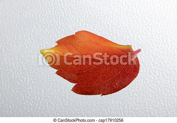 autumn leaves - csp17910256