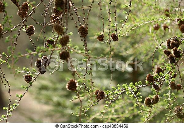 autumn leaves - csp43834459