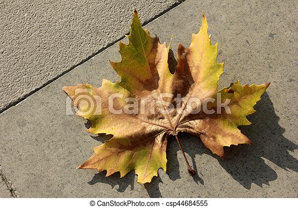 Autumn leaves - csp44684555
