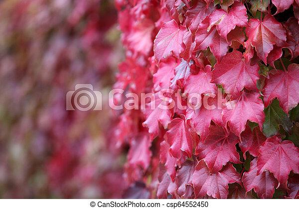 Autumn leaves - csp64552450