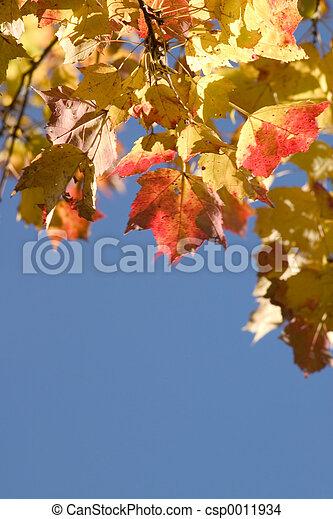 Autumn Leaves - csp0011934