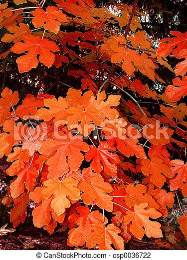 Autumn leaves - csp0036722