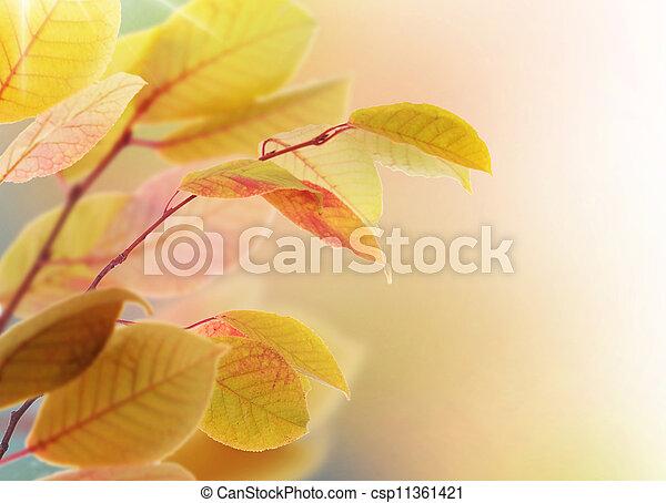 Autumn Leaves - csp11361421
