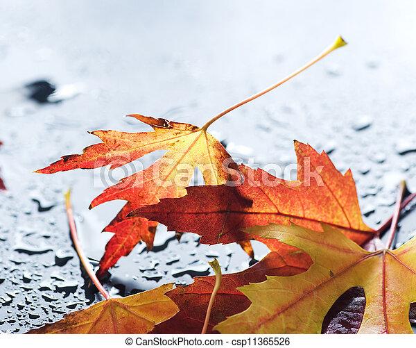 Autumn Leaves - csp11365526