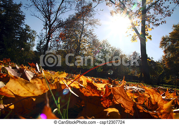 autumn leaves - csp12307724