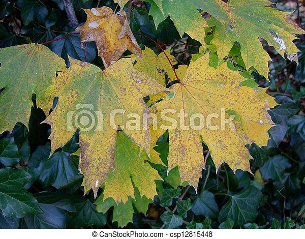 Autumn leaves - csp12815448