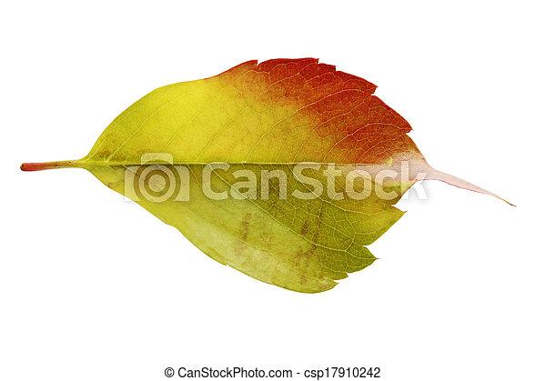 autumn leaves - csp17910242