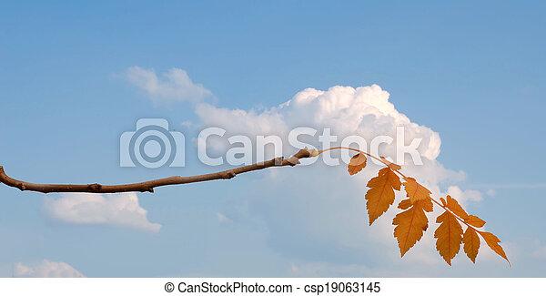 autumn leaves - csp19063145