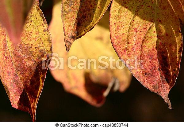 autumn leaves - csp43830744