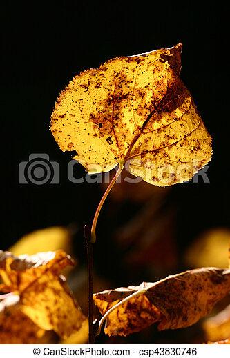 autumn leaves - csp43830746
