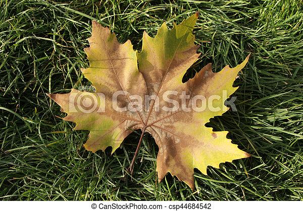 Autumn leaves - csp44684542