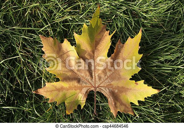 Autumn leaves - csp44684546