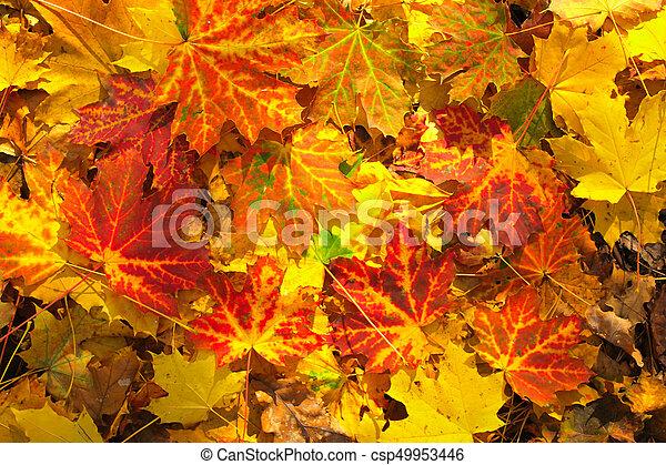 Autumn leaves - csp49953446