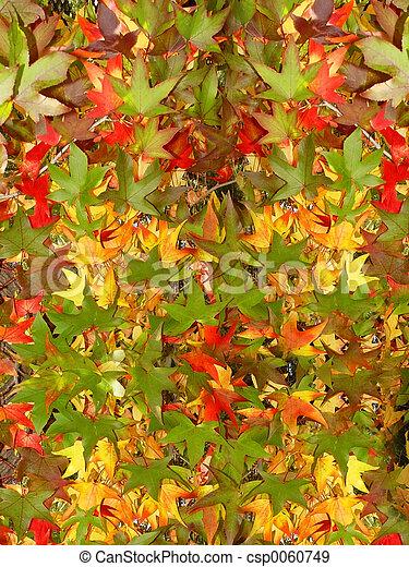 Autumn leaves - csp0060749