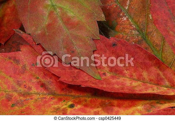 Autumn Leaves - csp0425449