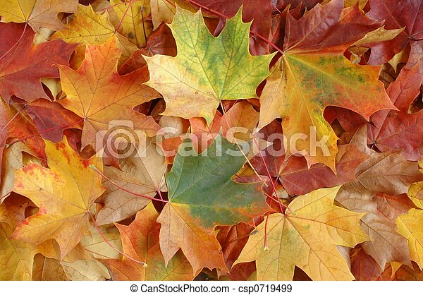 Autumn leaves - csp0719499
