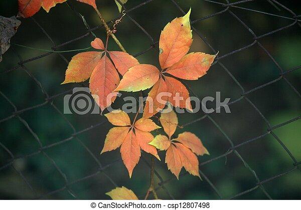 Autumn leaves - csp12807498