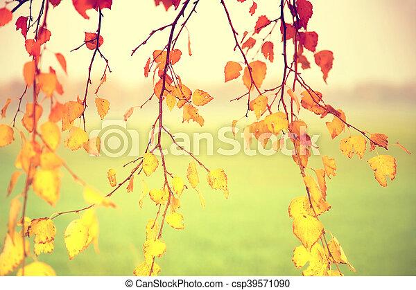 Autumn leaves - csp39571090