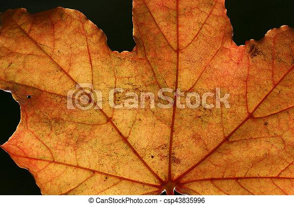 autumn leaves - csp43835996
