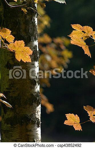autumn leaves - csp43852492