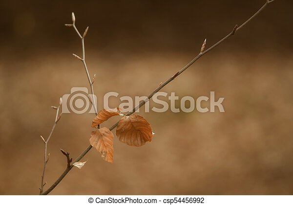 autumn leaves - csp54456992